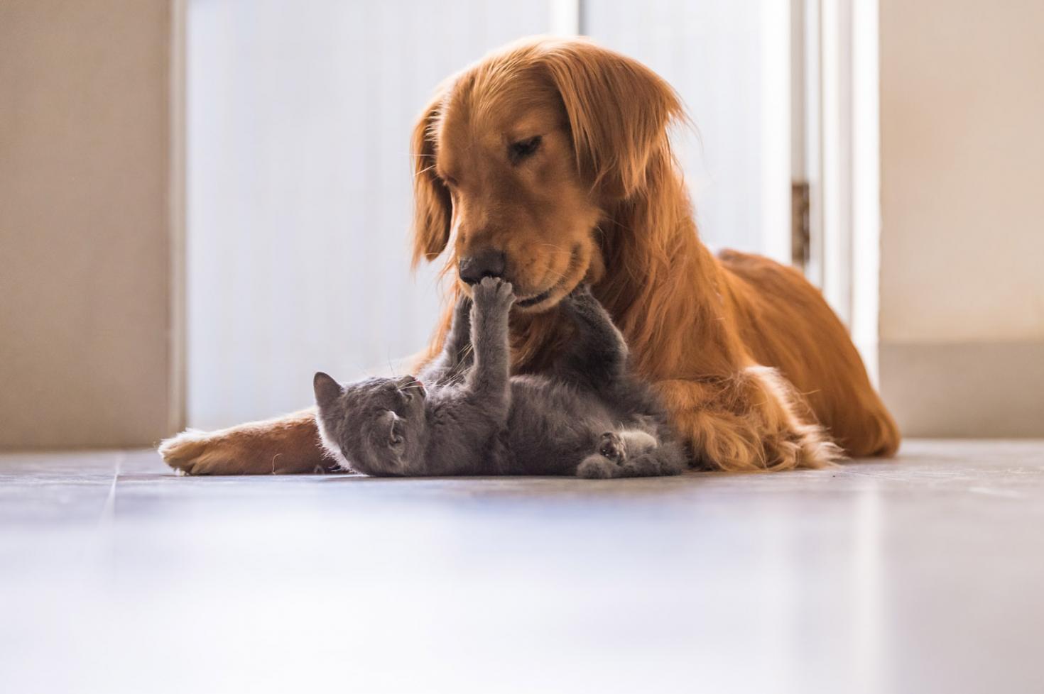 Mikor kell beoltani a kiskutyát