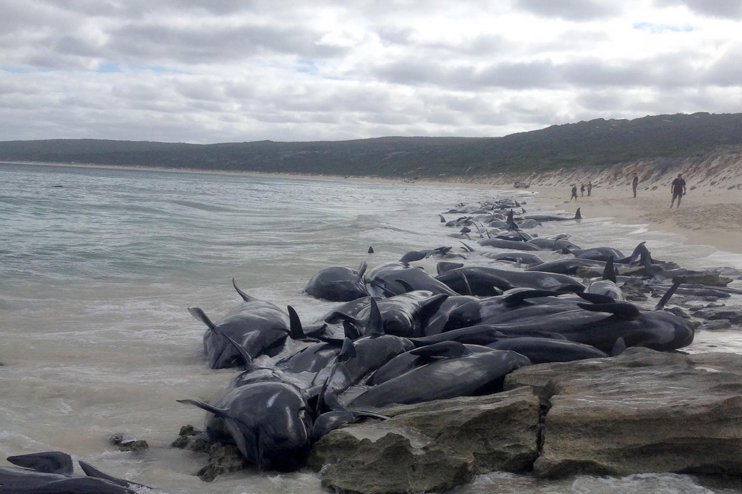 Delfin társkereső weboldal