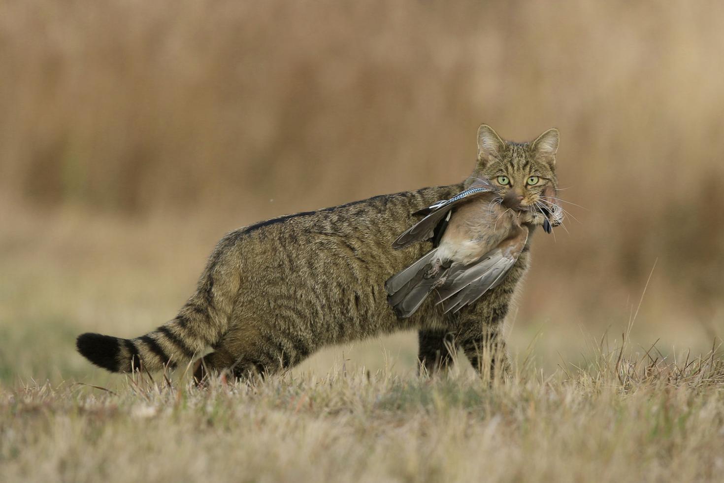 Társkereső weboldal macskák