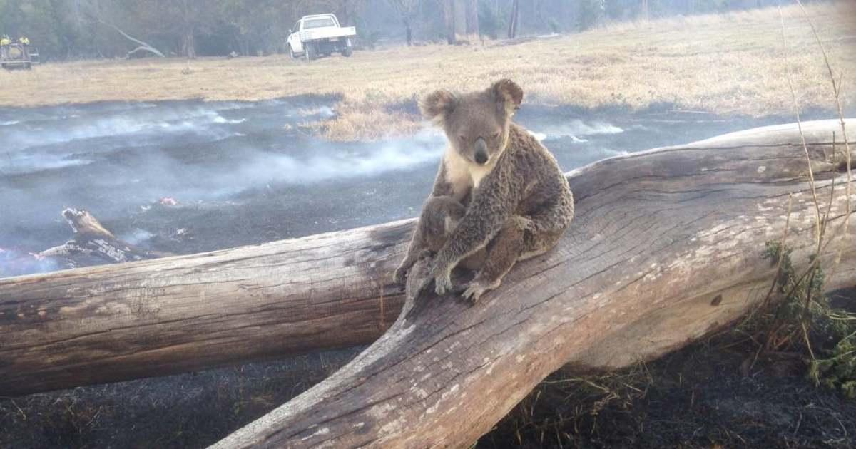 Ausztrália új-zéland társkereső oldal