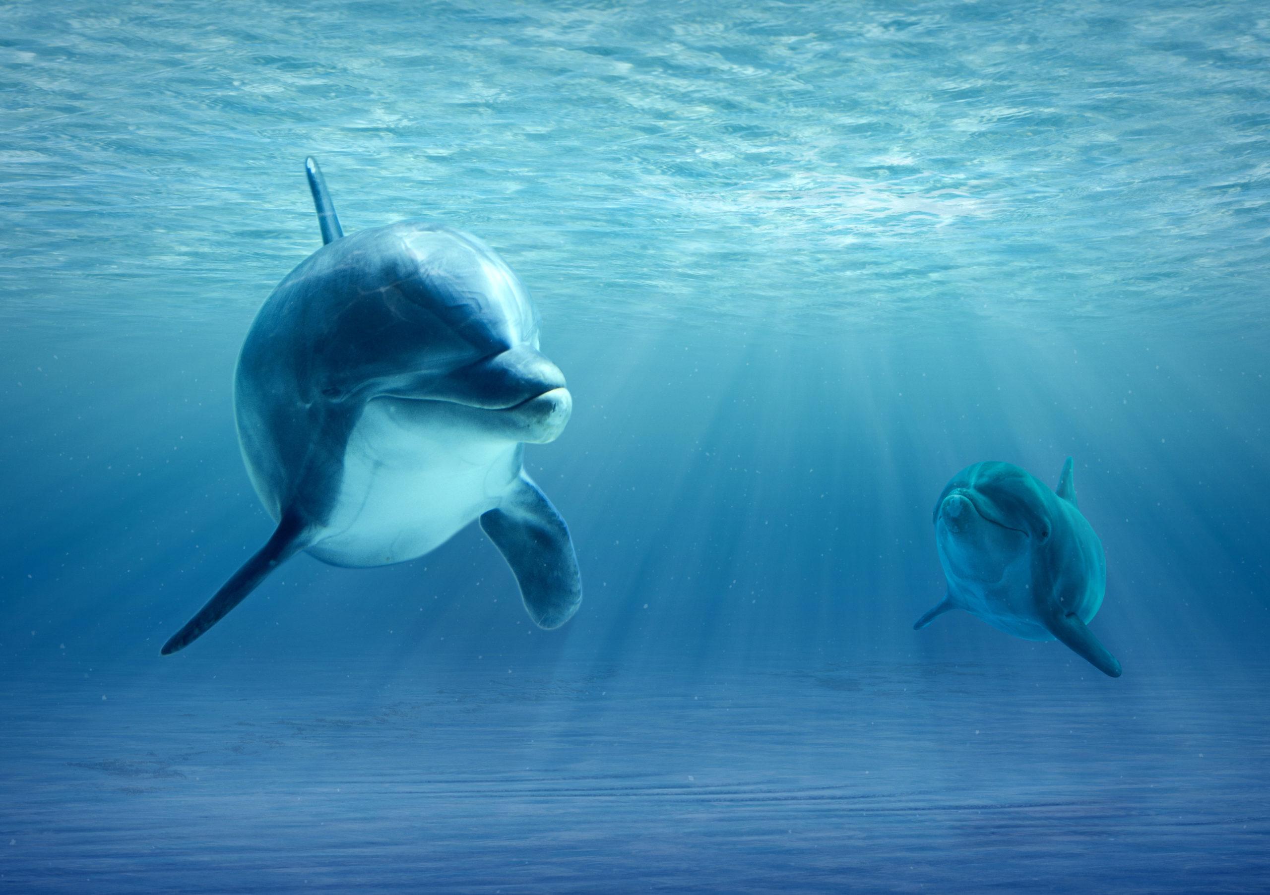 Különleges dolog derült ki a hím delfinekről